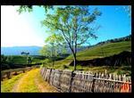 temi_tea_garden1