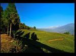 temi_tea_garden5